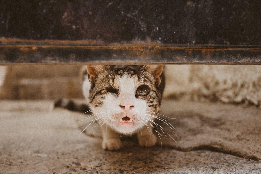 One-eyed kitty